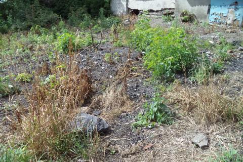 В мае 2012 года на наш участок с территории Конаревской основной общеобразовательной школы был вывезен мусор, шлак, неперегоревший уголь и метровым слоем разбросан по участку. Верхний плодородный слой снят, рост культурных растений там не возможен. Моя дочь инвалид-колясочник, передвижение, пользование участком и жильем для меё стало невозможно. Мы длительное время лишены возможности пользоваться своей собственностью (земельным участком и квартирой), приведенной в непригодность и запустение Изуродованная зе